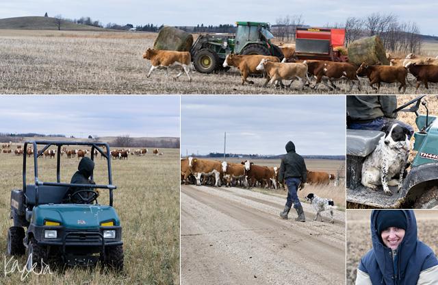 Blog: Farm Project – October