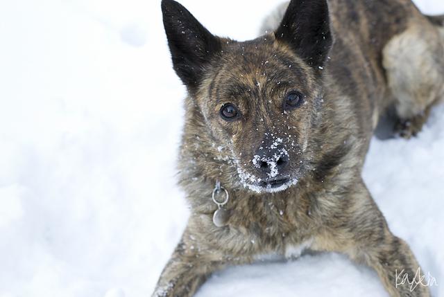 Kato in the snow, Karenia Niedzwiecki