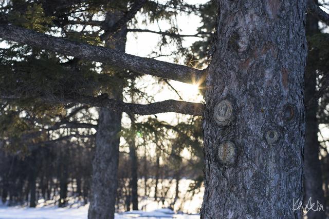 KN-AssiniboinePark-0981