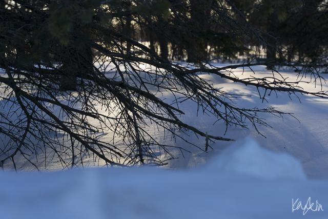 KN-AssiniboinePark-0985