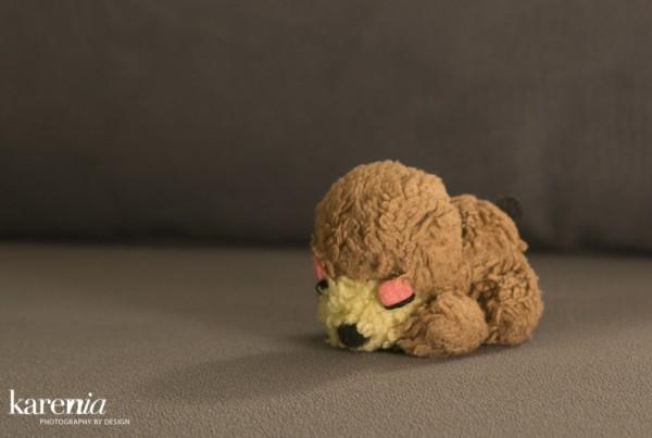 KN-Doggy-3174