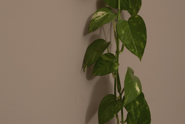 KN-Plant-3125