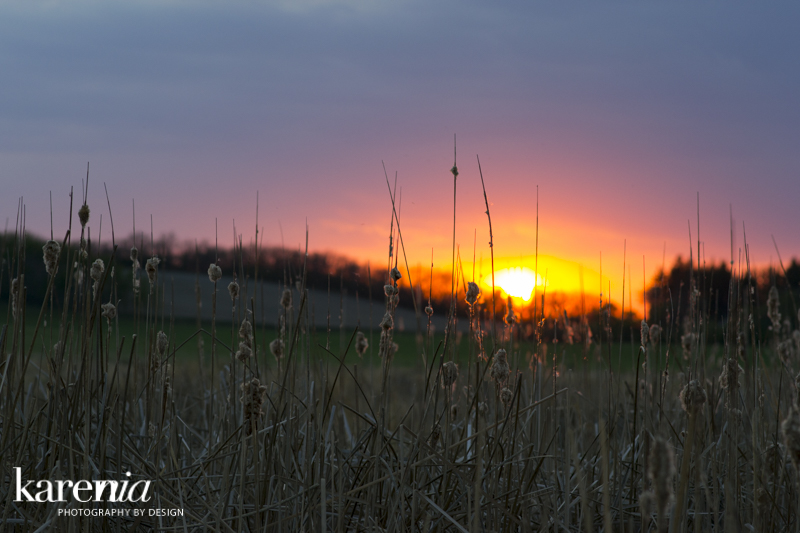 Sunset in the marsh