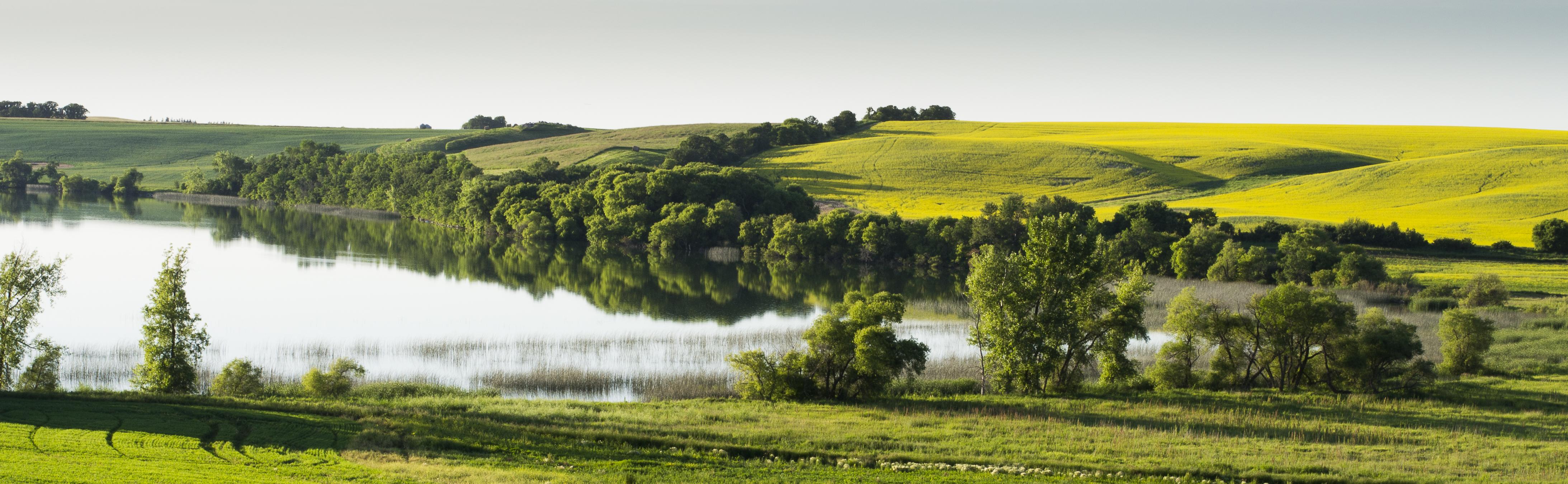Lakeside Fields, Karenia Niedzwiecki