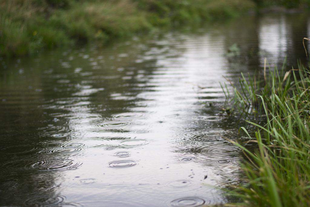 Rainy River, Karenia Niedzwiecki