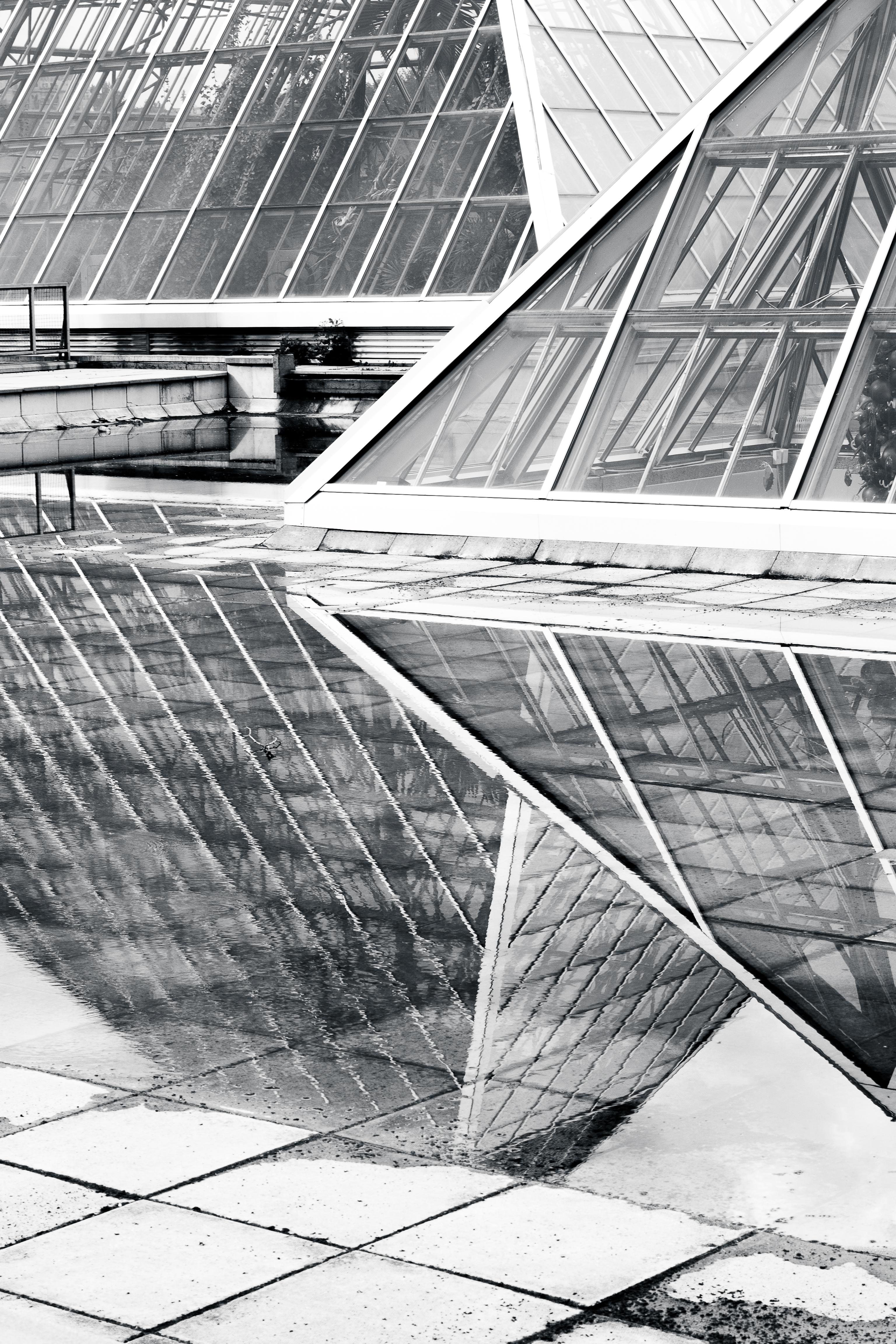 Reflective, Karenia Niedzwiecki