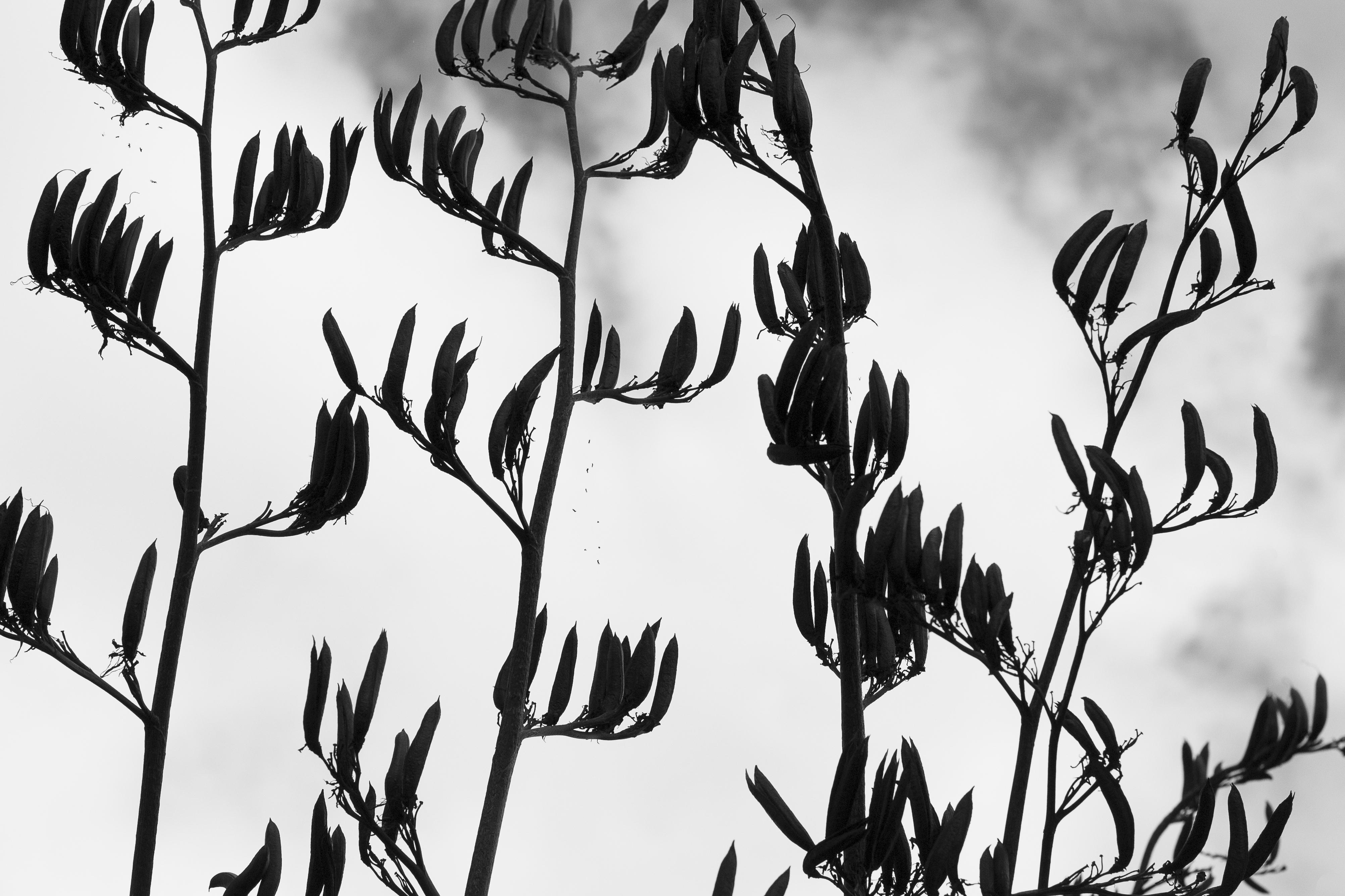 Silhouetted Seeds, Karenia Niedzwiecki
